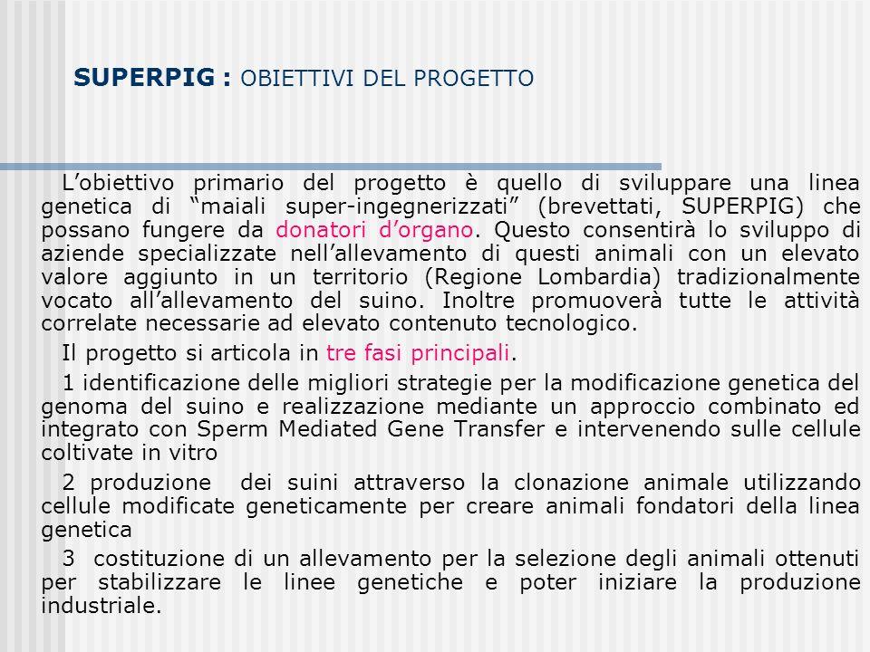 SUPERPIG : OBIETTIVI DEL PROGETTO Lobiettivo primario del progetto è quello di sviluppare una linea genetica di maiali super-ingegnerizzati (brevettati, SUPERPIG) che possano fungere da donatori dorgano.