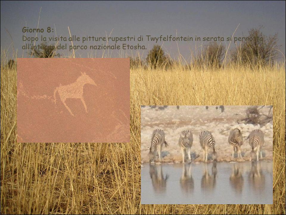 Giorno 8: Dopo la visita alle pitture rupestri di Twyfelfontein in serata si pernotta allinterno del parco nazionale Etosha.