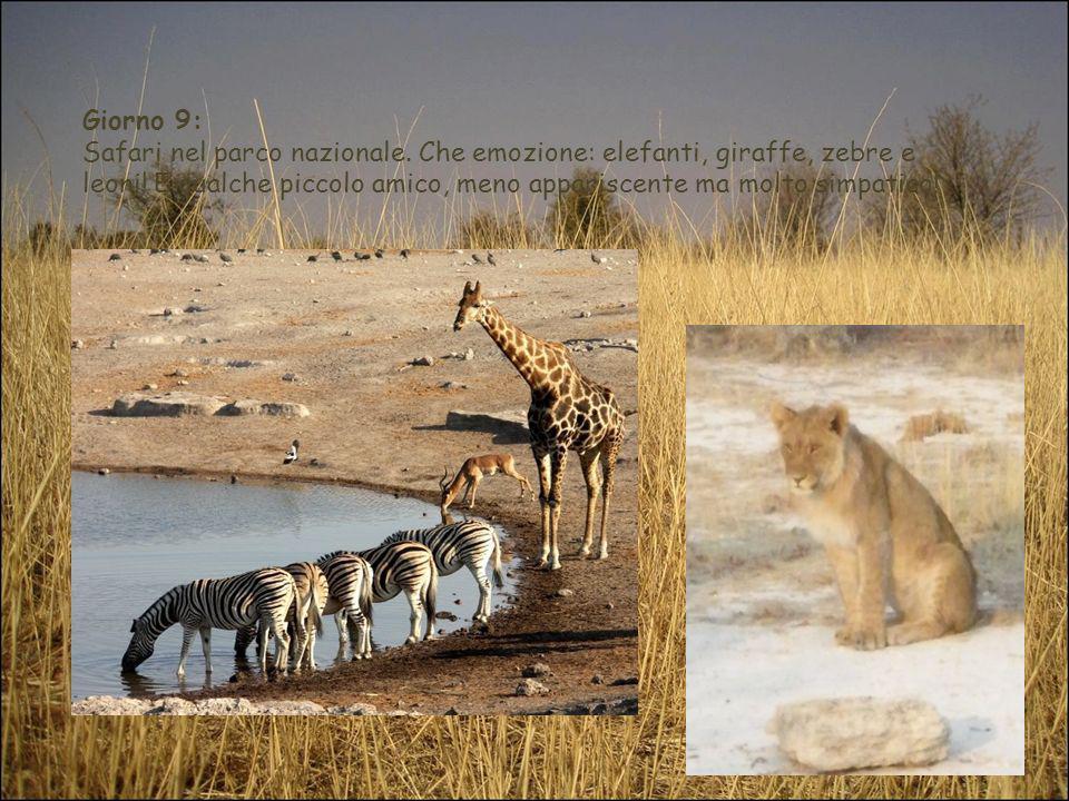 Giorno 9: Safari nel parco nazionale. Che emozione: elefanti, giraffe, zebre e leoni! E qualche piccolo amico, meno appariscente ma molto simpatico!