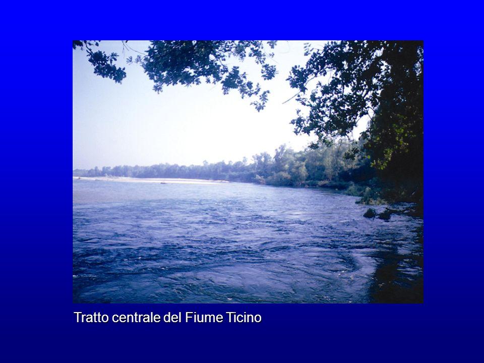 Tratto centrale del Fiume Ticino