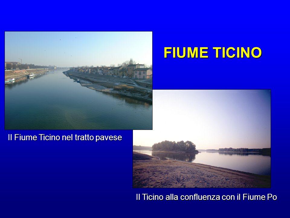 Il Fiume Ticino nel tratto pavese Il Ticino alla confluenza con il Fiume Po FIUME TICINO