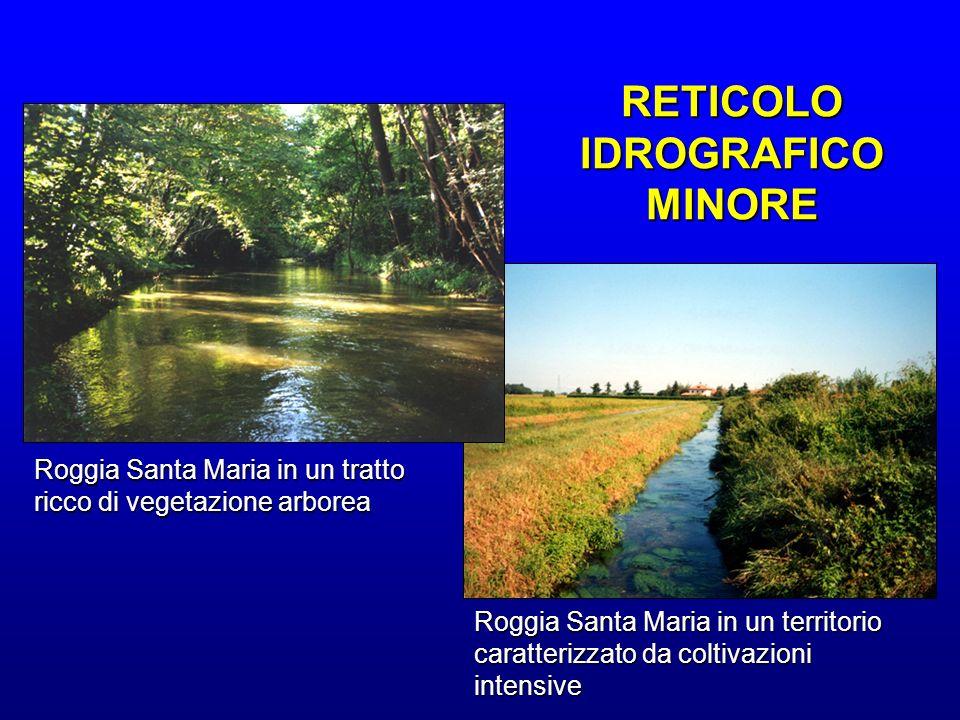Roggia Santa Maria in un tratto ricco di vegetazione arborea Roggia Santa Maria in un territorio caratterizzato da coltivazioni intensive RETICOLO IDR