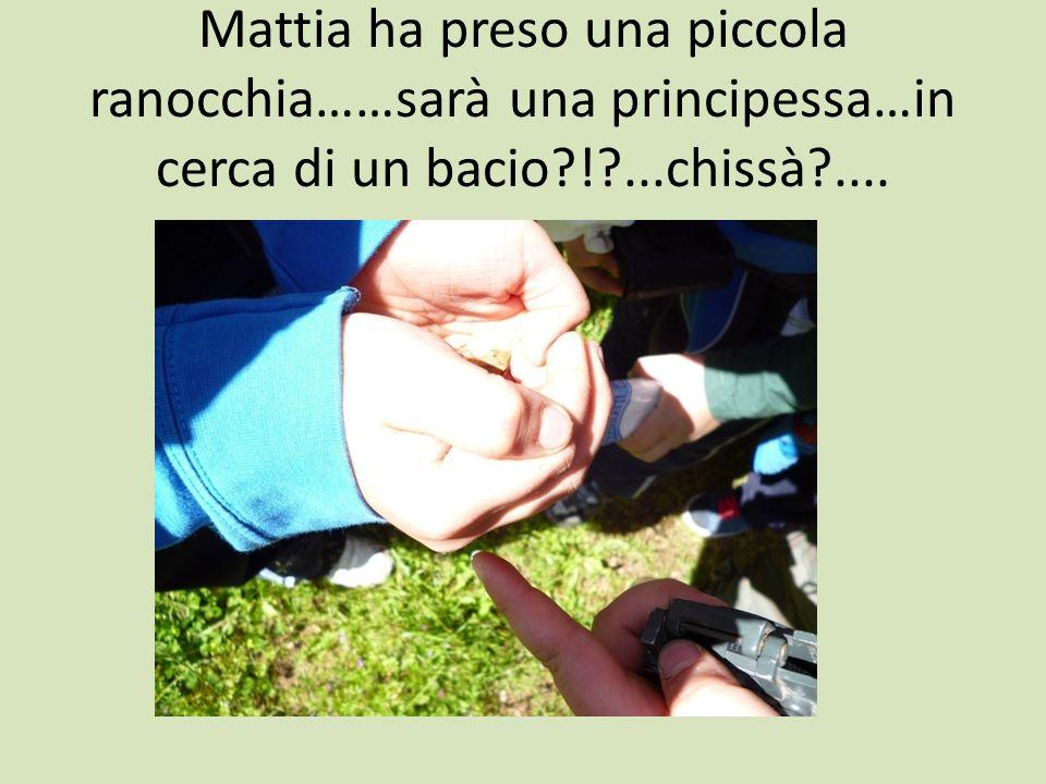 Mattia ha preso una piccola ranocchia……sarà una principessa…in cerca di un bacio?!?...chissà?....