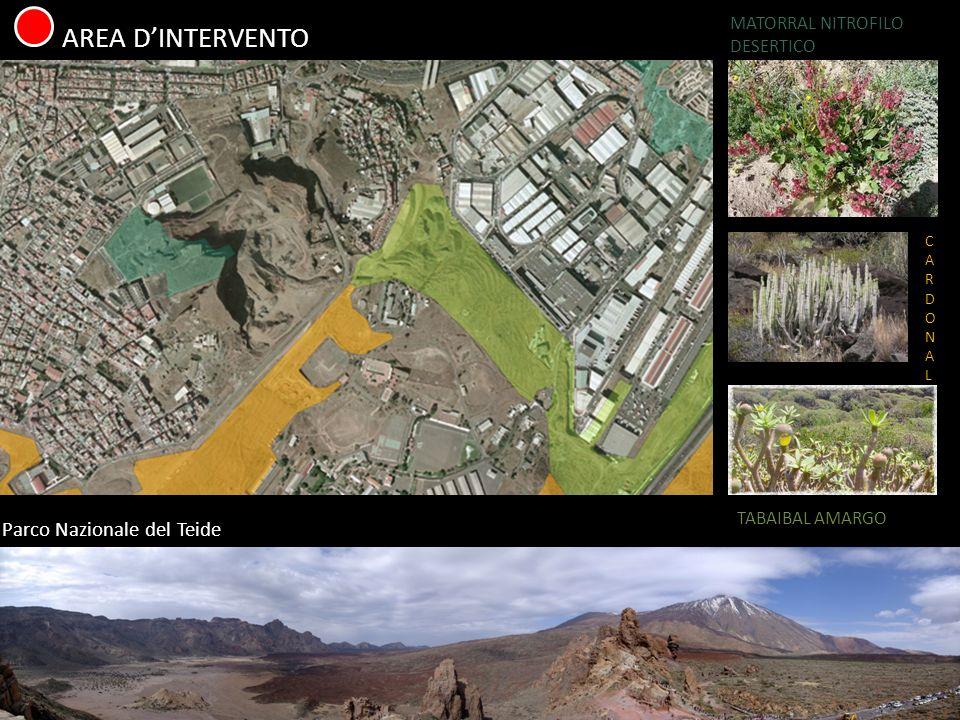 AREA DINTERVENTO Parco Nazionale del Teide MATORRAL NITROFILO DESERTICO CARDONALCARDONAL TABAIBAL AMARGO