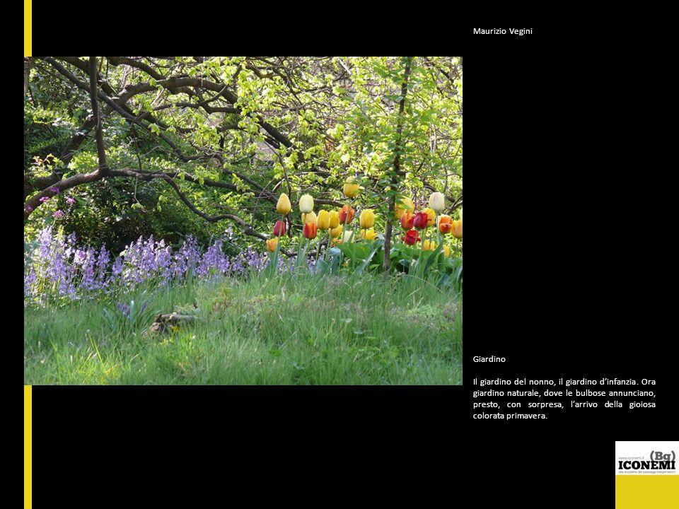 Maurizio Vegini Giardino Il giardino del nonno, il giardino dinfanzia. Ora giardino naturale, dove le bulbose annunciano, presto, con sorpresa, larriv