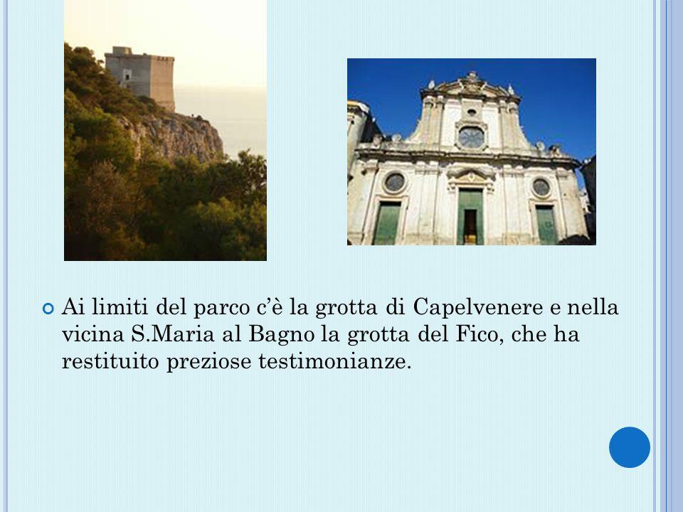 Ai limiti del parco cè la grotta di Capelvenere e nella vicina S.Maria al Bagno la grotta del Fico, che ha restituito preziose testimonianze.