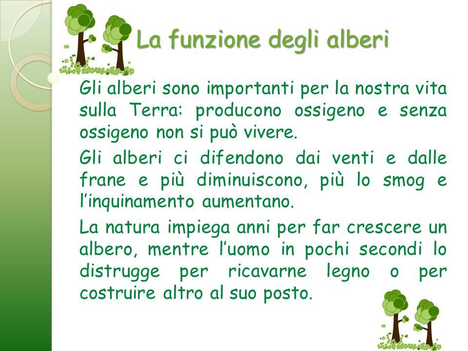 La funzione degli alberi Gli alberi sono importanti per la nostra vita sulla Terra: producono ossigeno e senza ossigeno non si può vivere. Gli alberi
