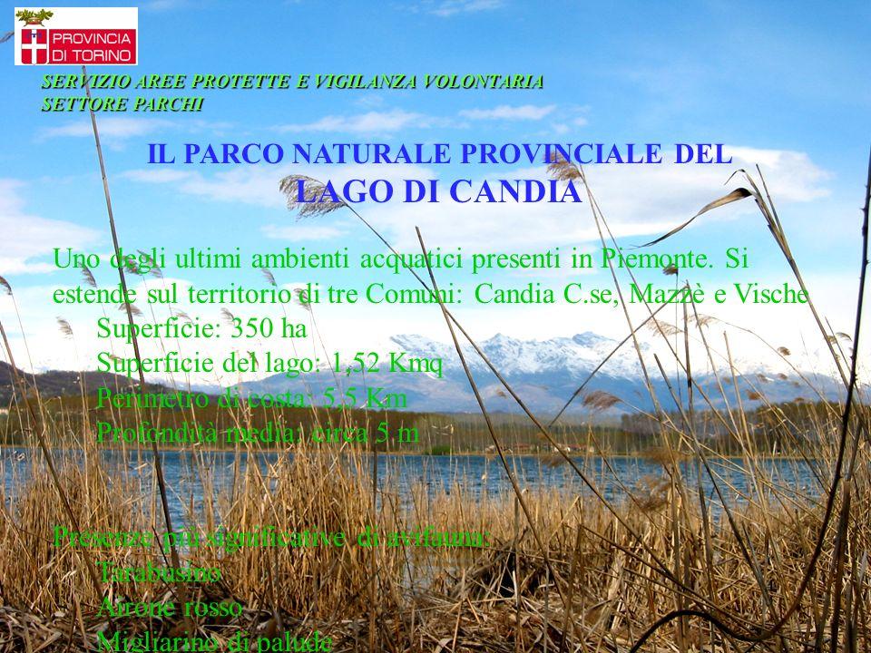 IL PARCO NATURALE PROVINCIALE DEL LAGO DI CANDIA Uno degli ultimi ambienti acquatici presenti in Piemonte. Si estende sul territorio di tre Comuni: Ca