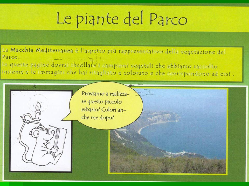 Il bosco Abbiamo visto tante piante come lo stracciabrache e il leccio.