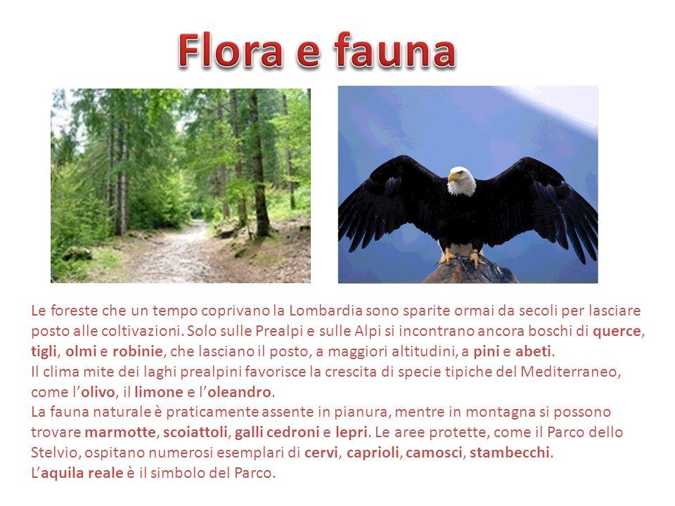 Le foreste che un tempo coprivano la Lombardia sono sparite ormai da secoli per lasciare posto alle coltivazioni. Solo sulle Prealpi e sulle Alpi si i