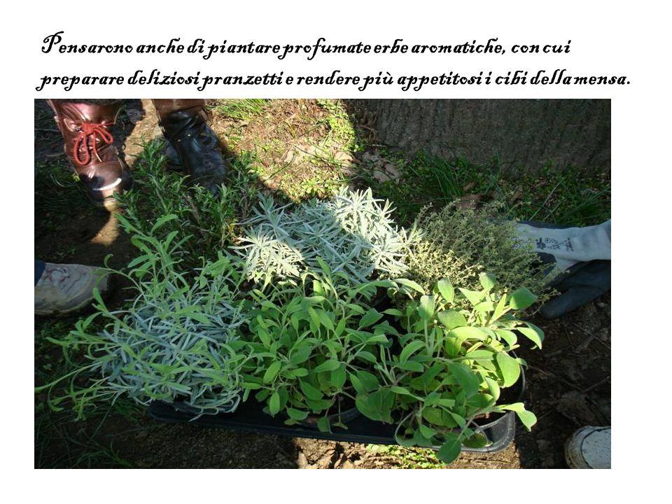 Pensarono anche di piantare profumate erbe aromatiche, con cui preparare deliziosi pranzetti e rendere più appetitosi i cibi della mensa.