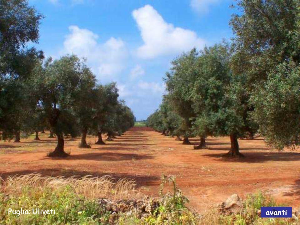 Puglia: Polignano a mare avanti