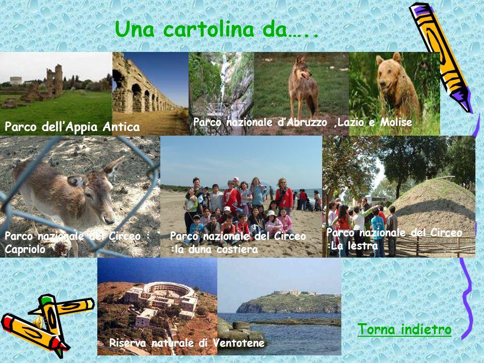 Una cartolina da….. Parco nazionale del Circeo :la duna costiera Parco nazionale del Circeo : Capriolo Parco nazionale del Circeo :La lestra Parco del