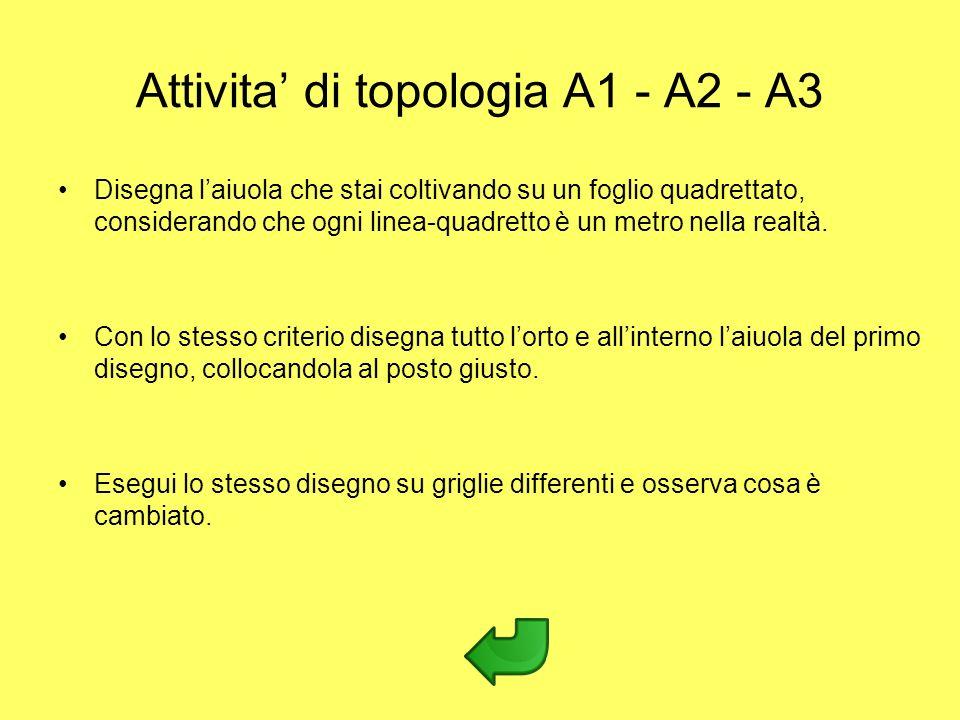 Attivita di topologia A1 - A2 - A3 Disegna laiuola che stai coltivando su un foglio quadrettato, considerando che ogni linea-quadretto è un metro nell