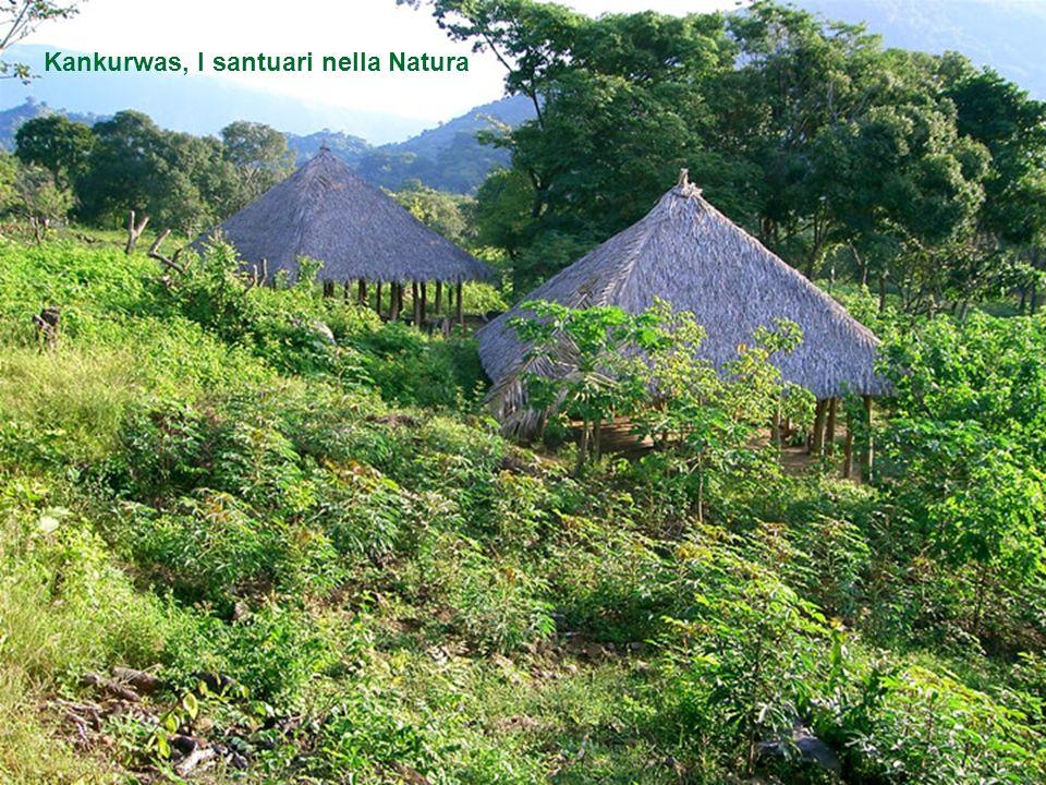 Considerano la Sierra de Santa Marta come la Terra dei Saggi, di coloro che sanno, la terra dell'innocenza, la terra dell'umiltà. Cè una linea di dema
