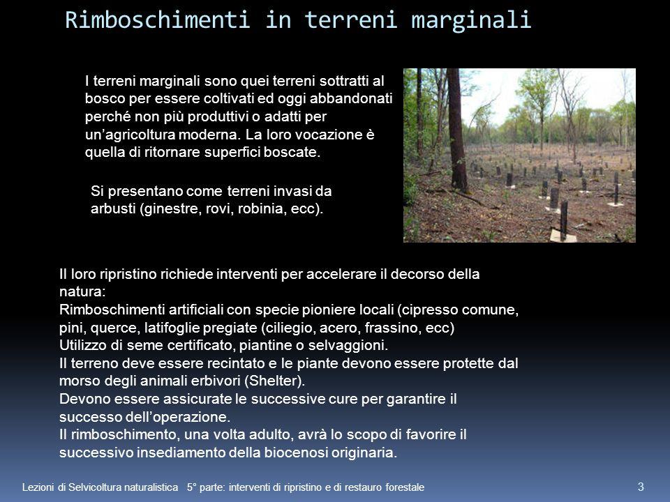 Lezioni di Selvicoltura naturalistica 5° parte: interventi di ripristino e di restauro forestale 3 Rimboschimenti in terreni marginali I terreni margi