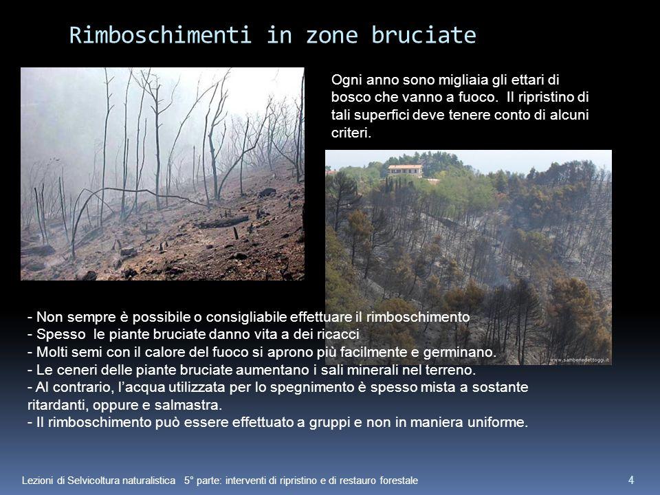 Lezioni di Selvicoltura naturalistica 5° parte: interventi di ripristino e di restauro forestale 4 Rimboschimenti in zone bruciate Ogni anno sono migliaia gli ettari di bosco che vanno a fuoco.