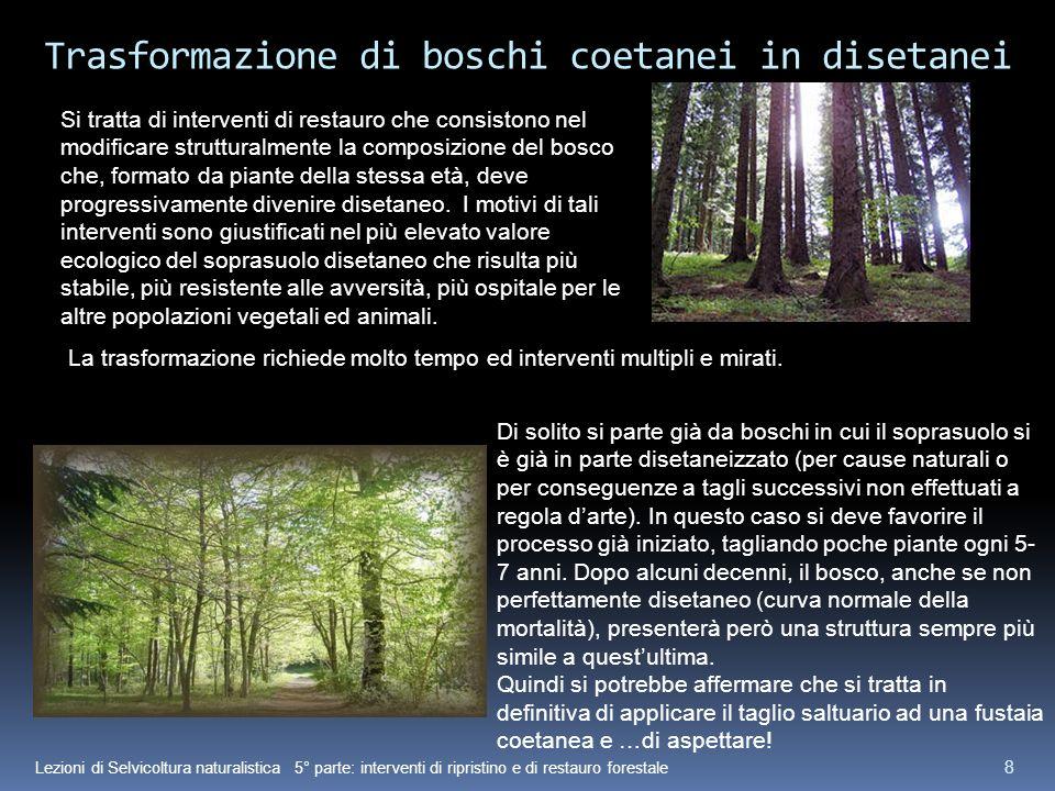 Lezioni di Selvicoltura naturalistica 5° parte: interventi di ripristino e di restauro forestale 8 Trasformazione di boschi coetanei in disetanei Si t