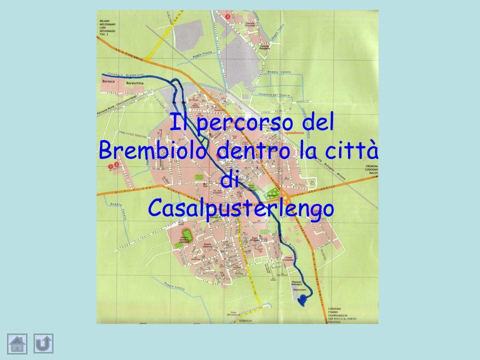 … un fiume, un fiumiciattolo, un rio, anzi per noi casalini, un rivus,rivus, …chiamato BrembioloBrembiolo