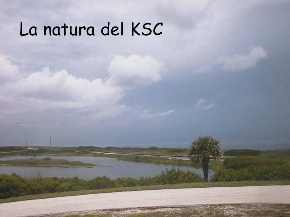 La natura del KSC