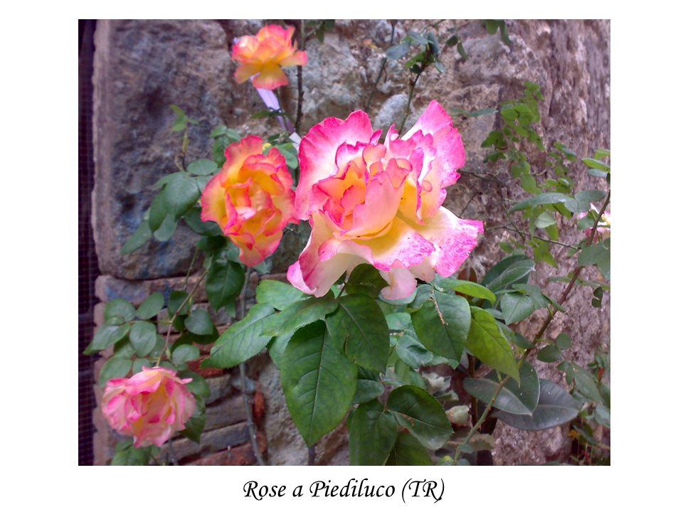 I fiori sono farfalle posate su uno stelo, che affidano allaria il loro profumo e alla terra i loro colori.