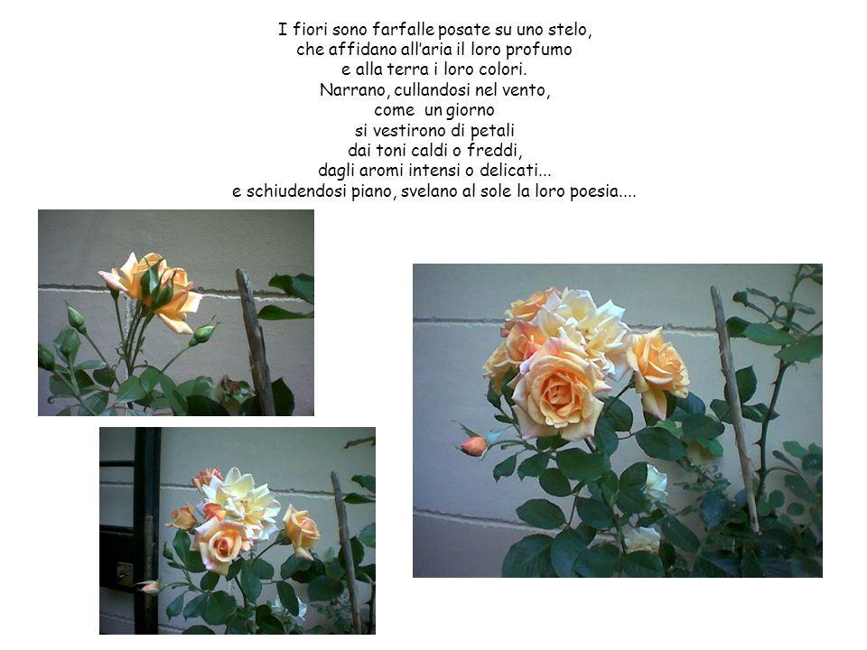I fiori sono farfalle posate su uno stelo, che affidano allaria il loro profumo e alla terra i loro colori. Narrano, cullandosi nel vento, come un gio