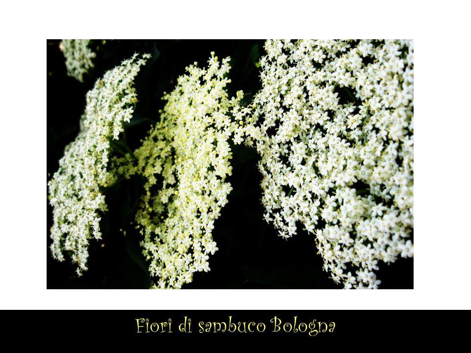 Orto botanico di Ravenna