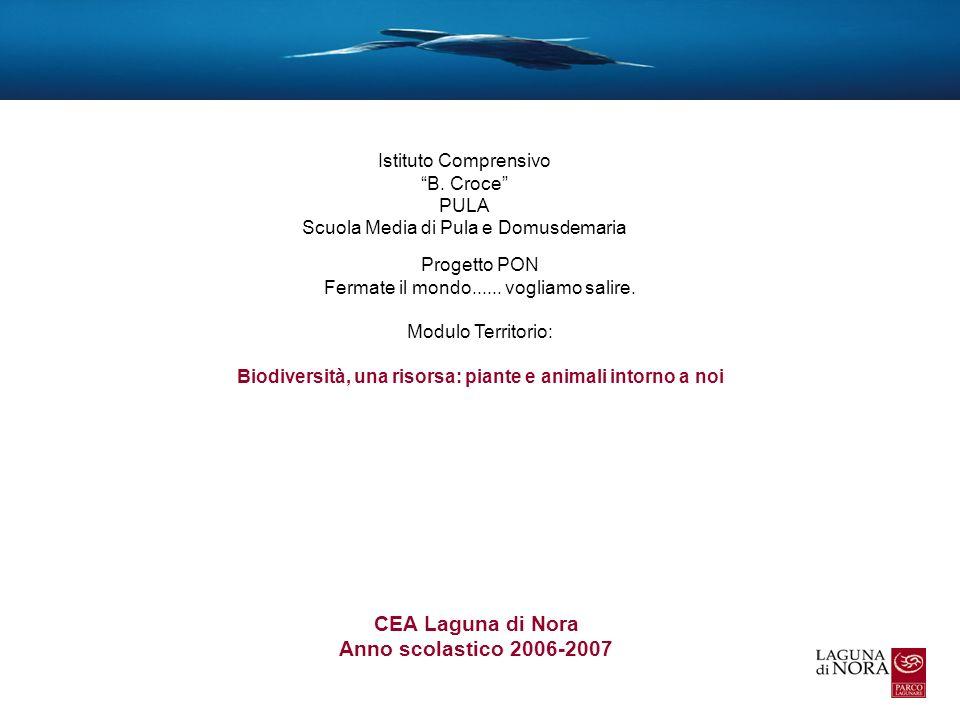 CEA Laguna di Nora Anno scolastico 2006-2007 Istituto Comprensivo B. Croce PULA Scuola Media di Pula e Domusdemaria Progetto PON Fermate il mondo.....