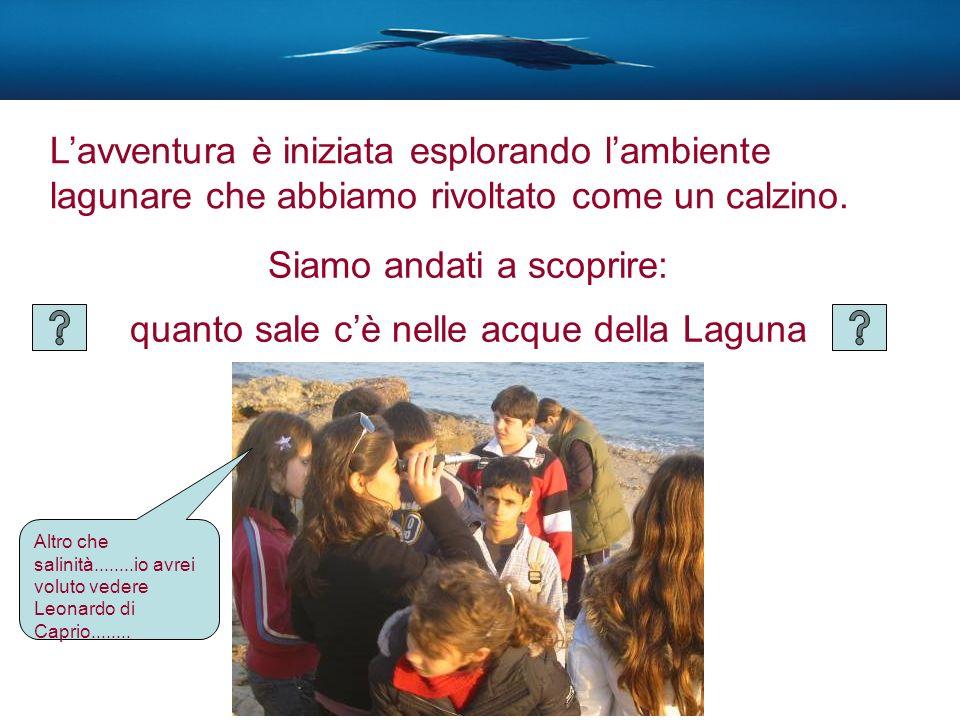 Siamo andati a scoprire: quanto sale cè nelle acque della Laguna Altro che salinità........io avrei voluto vedere Leonardo di Caprio........ Lavventur