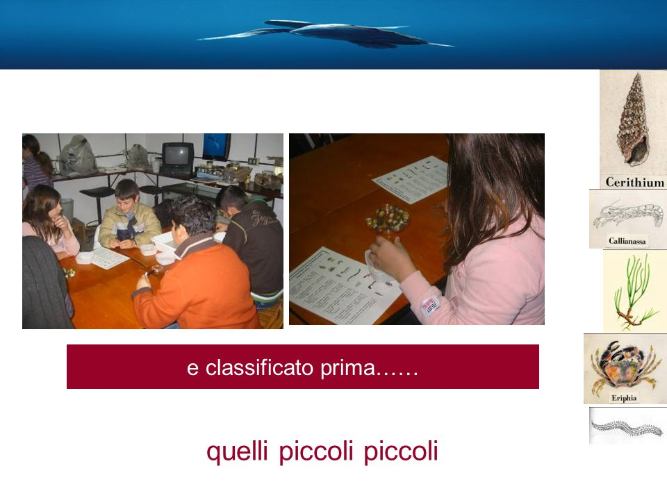 e classificato prima…… quelli piccoli piccoli