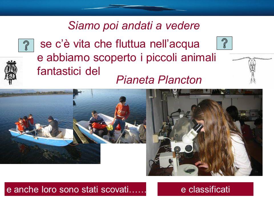 se cè vita che fluttua nellacqua e abbiamo scoperto i piccoli animali fantastici del Pianeta Plancton e anche loro sono stati scovati……e classificati