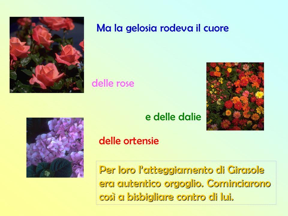 Ma la gelosia rodeva il cuore delle rose delle ortensie e delle dalie Per loro latteggiamento di Girasole era autentico orgoglio. Cominciarono così a