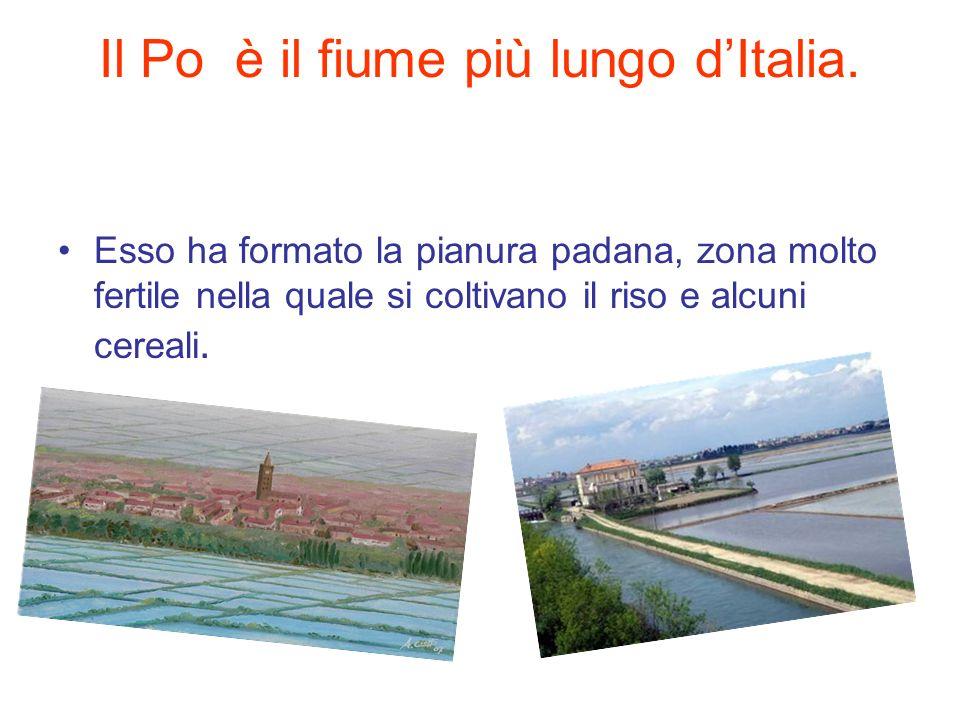 Il Po è il fiume più lungo dItalia. Esso ha formato la pianura padana, zona molto fertile nella quale si coltivano il riso e alcuni cereali.