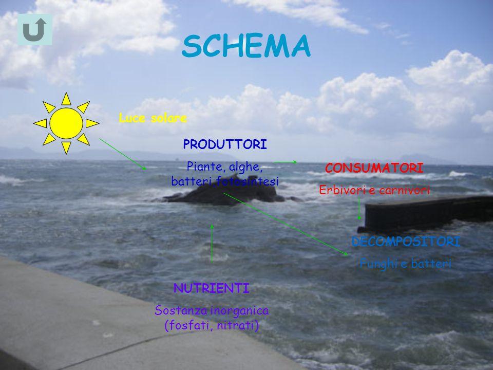 Luce solare PRODUTTORI Piante, alghe, batteri,fotosintesi CONSUMATORI Erbivori e carnivori DECOMPOSITORI Funghi e batteri NUTRIENTI Sostanza inorganica (fosfati, nitrati)
