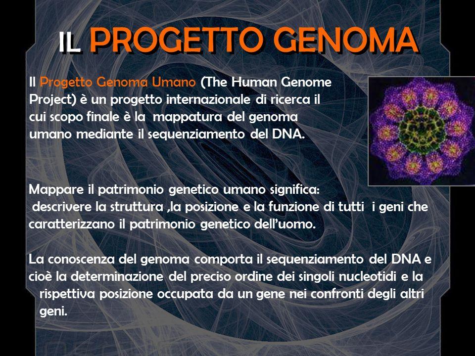 IL PROGETTO GENOMA Mappare il patrimonio genetico umano significa: descrivere la struttura,la posizione e la funzione di tutti i geni che caratterizza