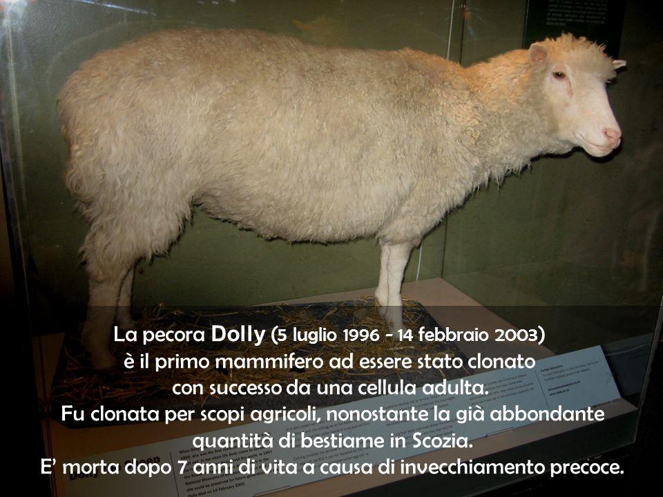 La pecora Dolly ( 5 luglio 1996 - 14 febbraio 2003 ) è il primo mammifero ad essere stato clonato con successo da una cellula adulta. Fu clonata per s