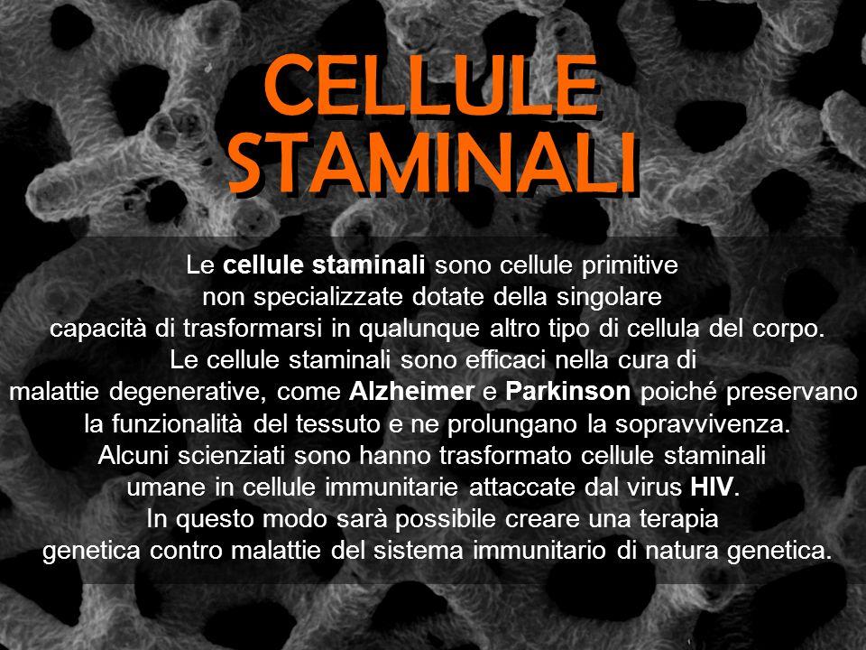 Le cellule staminali sono cellule primitive non specializzate dotate della singolare capacità di trasformarsi in qualunque altro tipo di cellula del c