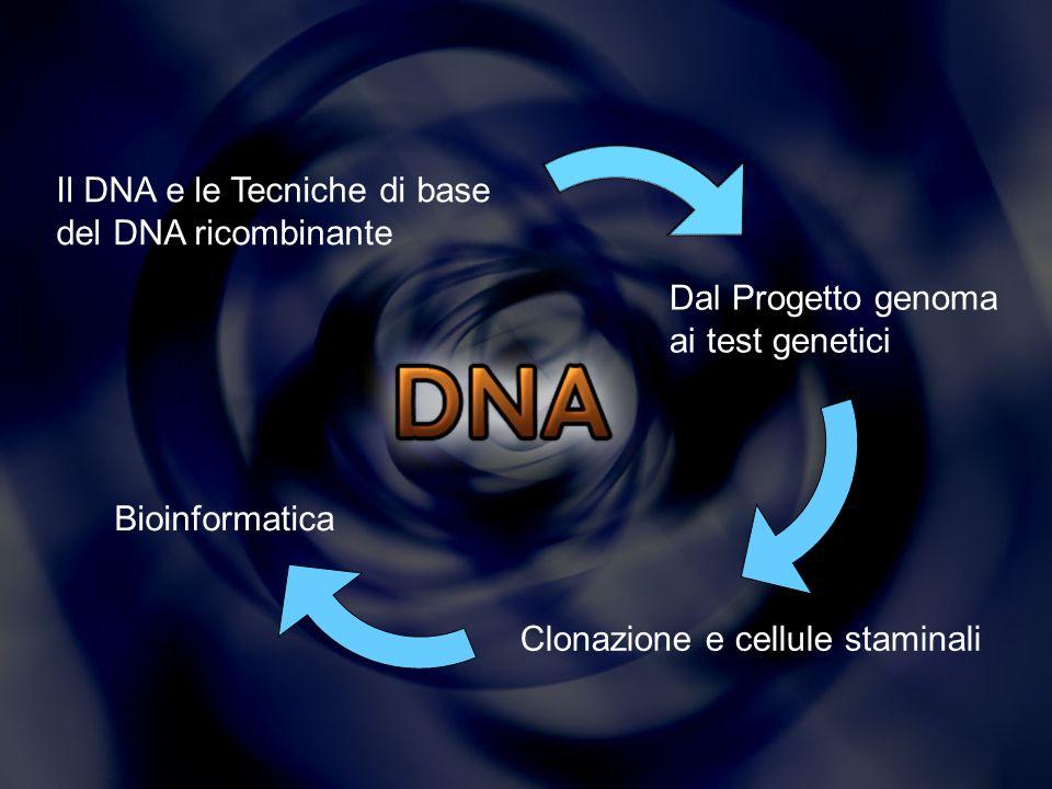 Tecniche del DNA ricombinante Consistono in un complesso insieme di tecniche di manipolazione del DNA che consentono di isolare dei brevi segmenti di tale molecola per: moltiplicarli studiarne la sequenza nucleotidica trasferirli nel genoma di altre cellule controllandone lincorporazione e lespressione.