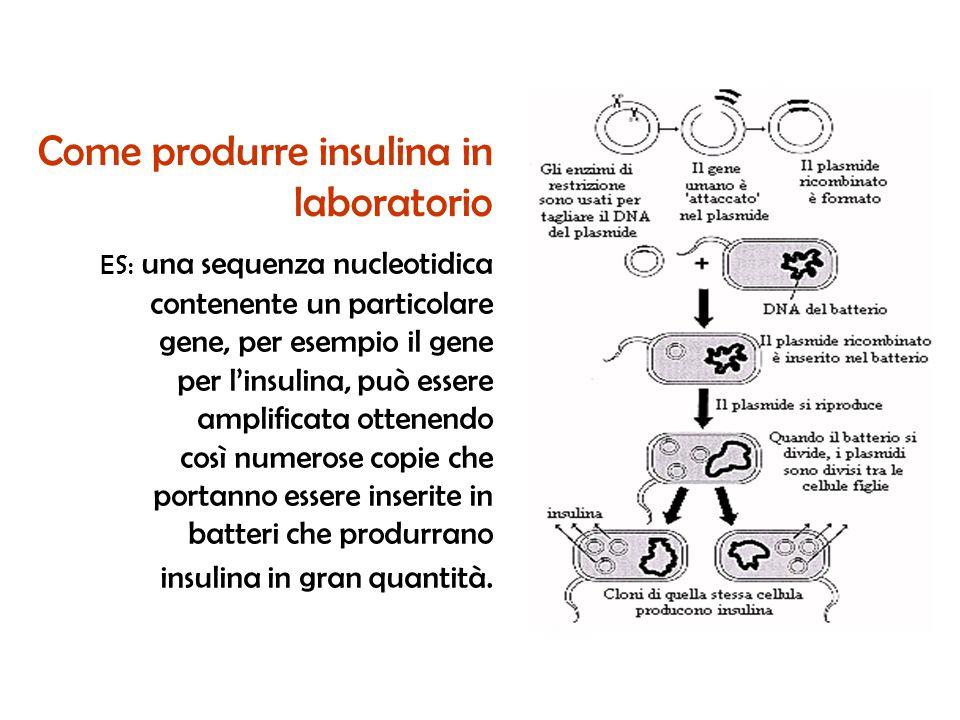 ES: una sequenza nucleotidica contenente un particolare gene, per esempio il gene per linsulina, può essere amplificata ottenendo così numerose copie