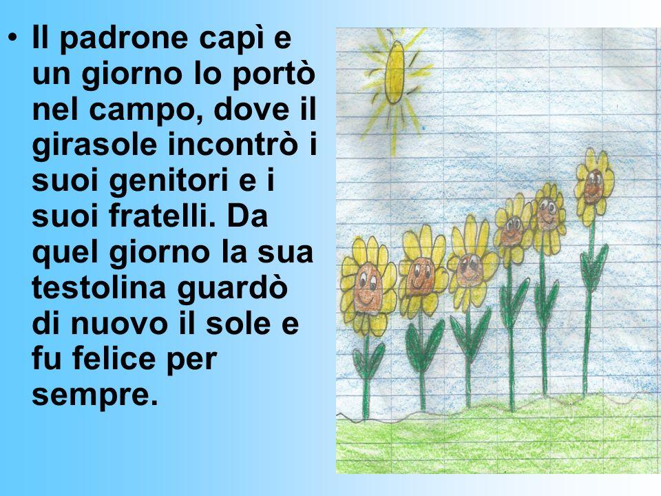 Romeo il girasole triste Cera una volta un girasole di nome Romeo, che viveva dentro un vaso dove il suo padrone lo aveva piantato. Lui era molto tris