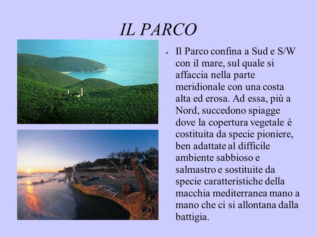 IL PARCO Il Parco confina a Sud e S/W con il mare, sul quale si affaccia nella parte meridionale con una costa alta ed erosa. Ad essa, più a Nord, suc