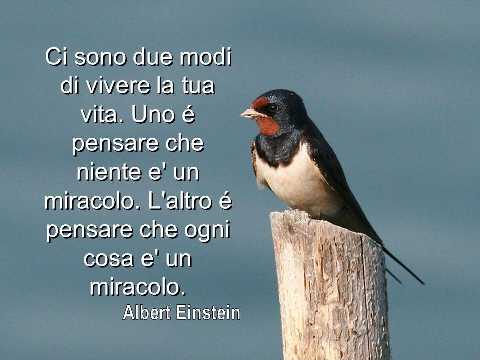 Ci sono due modi di vivere la tua vita.Uno é pensare che niente e un miracolo.