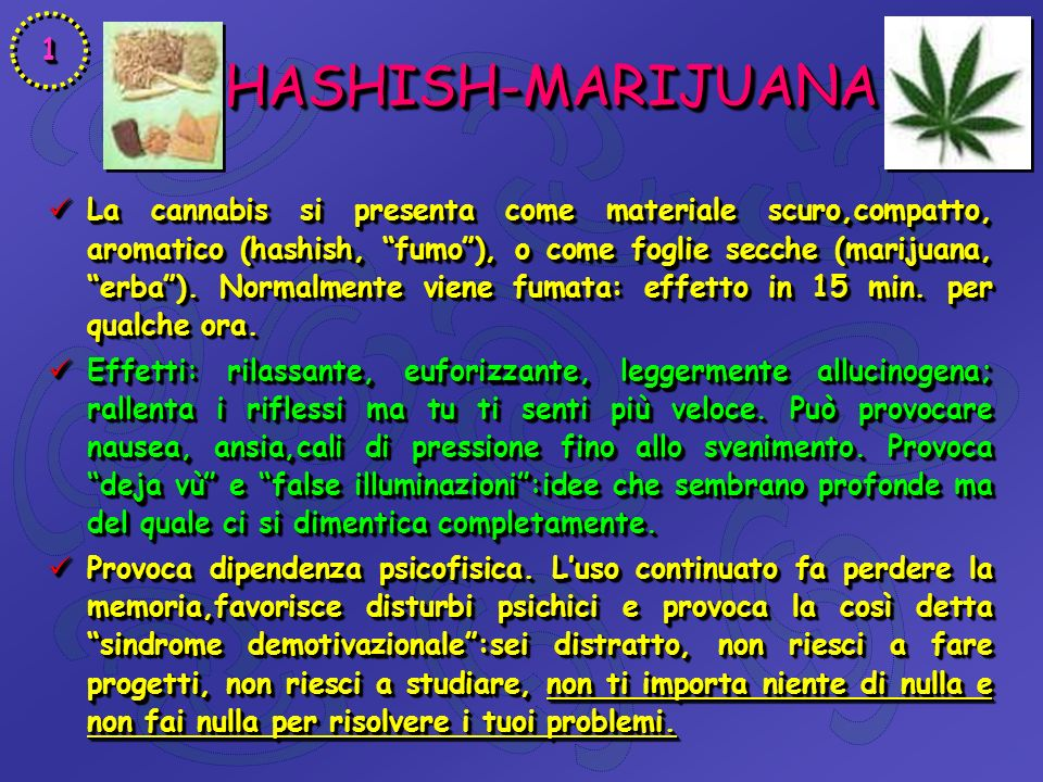 HASHISH-MARIJUANA HASHISH-MARIJUANA La cannabis si presenta come materiale scuro,compatto, aromatico (hashish, fumo), o come foglie secche (marijuana, erba).