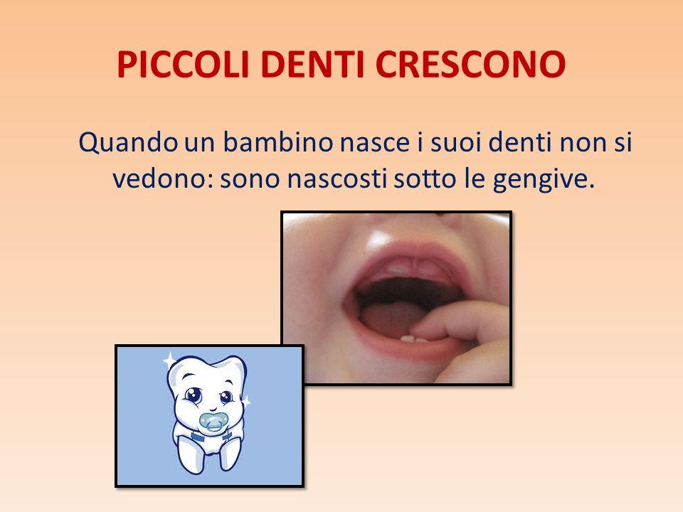 PICCOLI DENTI CRESCONO Quando un bambino nasce i suoi denti non si vedono: sono nascosti sotto le gengive.