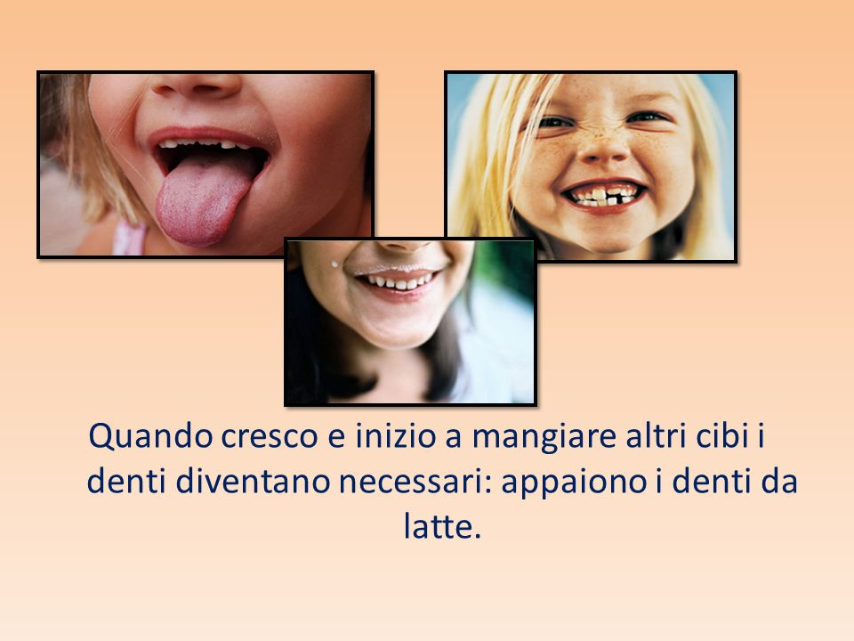 Mentre i denti di latte lavorano, sotto le loro radici si sviluppano altri dentini più grossi e più robusti che prenderanno il posto dei denti di latte.