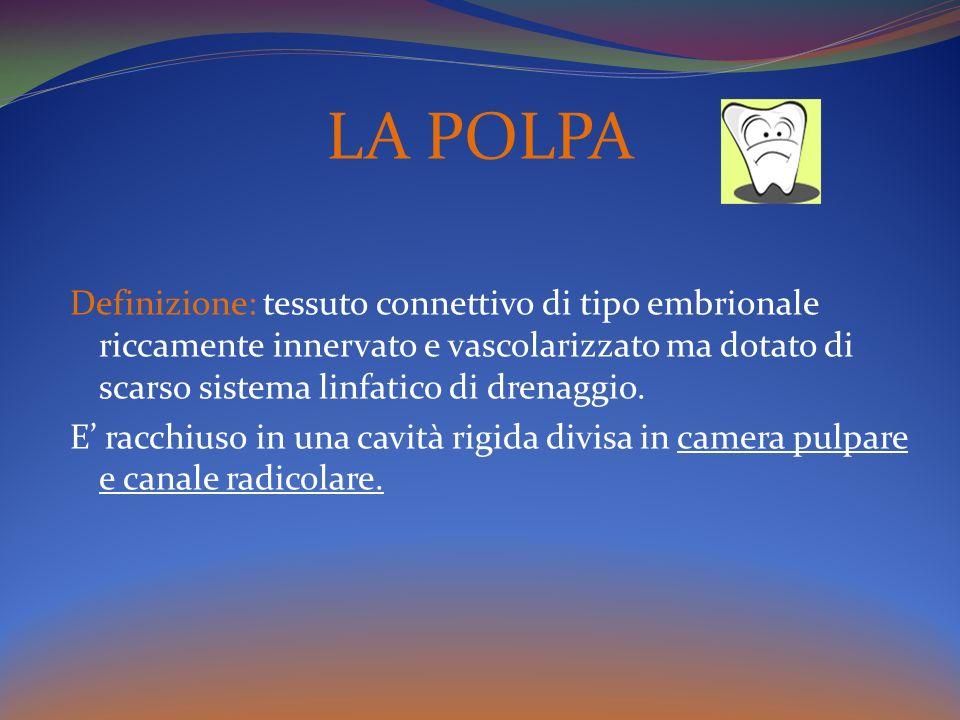 LA POLPA Definizione: tessuto connettivo di tipo embrionale riccamente innervato e vascolarizzato ma dotato di scarso sistema linfatico di drenaggio.