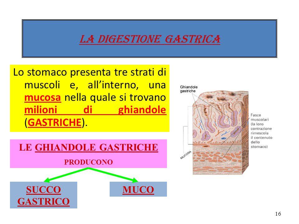 Lesofago comunica con lo stomaco attraverso una valvola detta cardias. Lo stomaco ha la forma di un sacco allungato e le sue pareti sono formate da fi