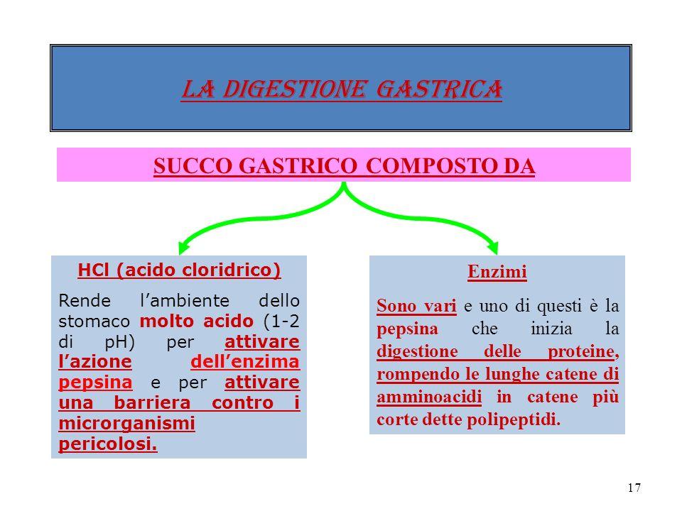 16 Lo stomaco presenta tre strati di muscoli e, allinterno, una mucosa nella quale si trovano milioni di ghiandole (GASTRICHE). LA DIGESTIONE gastrica