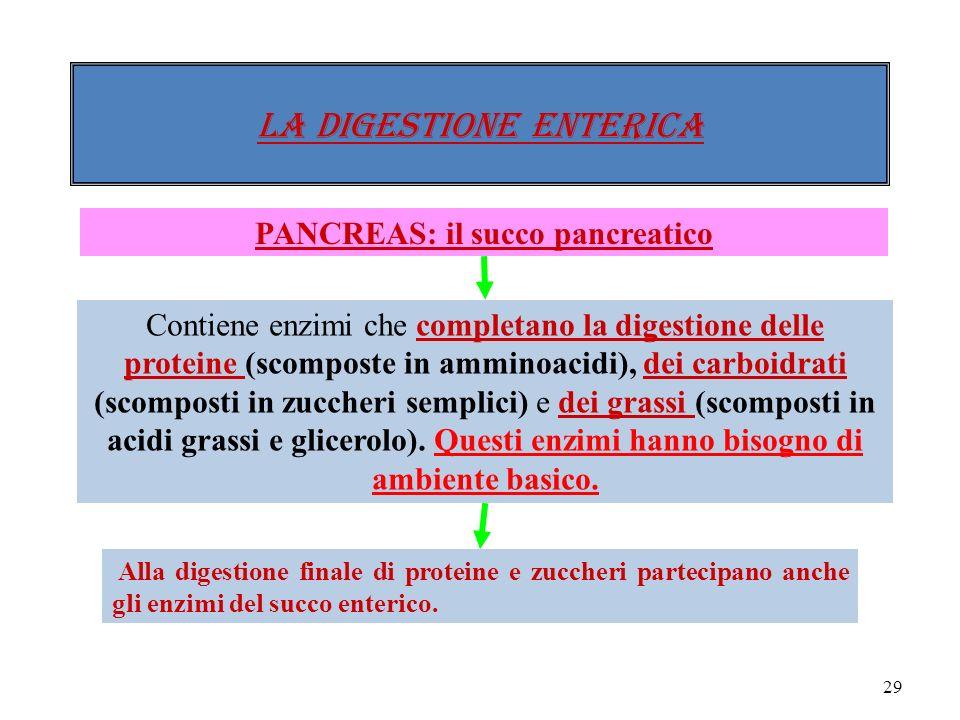 28 Il duodeno secerne il succo enterico che stimola il pancreas e il fegato a produrre dei succhi che sono riversati nel duodeno (succo pancreatico, e