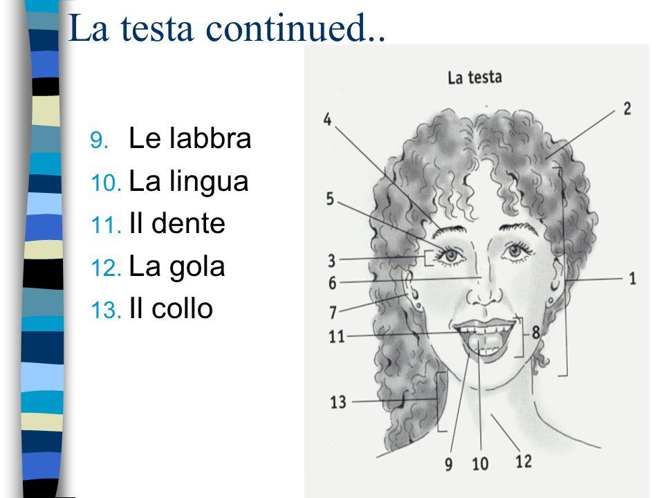 La testa continued.. 9. Le labbra 10. La lingua 11. Il dente 12. La gola 13. Il collo